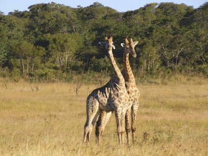 Reise in Botswana, Afrika von seiner schönsten Seite Urlaub im Paradies: Sossusvlei, Etosha NP, Okavango-Delta, Chobe NP und Victoriafälle entspannt erleben