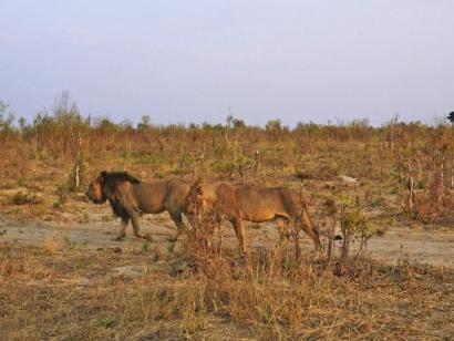 Reise in Botswana, Afrika von seiner schönsten Seite Urlaub im Paradies: Sossusvlei, Etosha, Okavango-Delta, Chobe, Hwange und Victoriafälle entspannt erleben