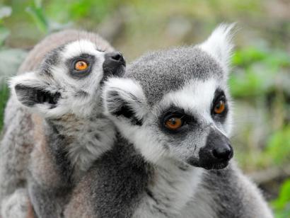 Reise in Madagaskar, Tsaranoro-Klettermassiv im Andringitra Nationalpark