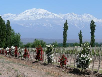 Reise in Argentinien, Highlights_4_Wein_in_Mendoza_LRT_web.JPG