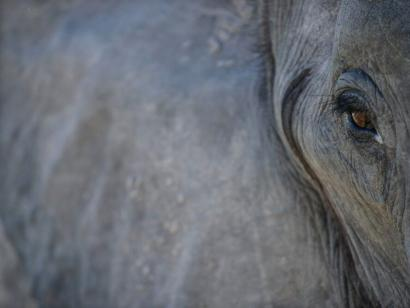 Reise in Botswana, Elefant im Okavango-Delta