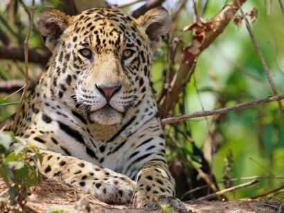 Auf den Spuren von Jaguar, Kaiman und Ameisenbär Fernab großer Touristenströme, in intakter Wildnis auf Regenwaldexpedition gehen