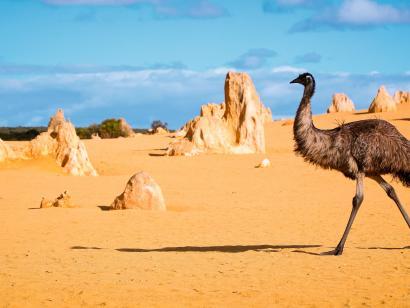 Reise in Australien, Australien: Die ausführliche Reise