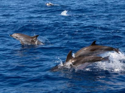 Reise in Portugal, Delfine