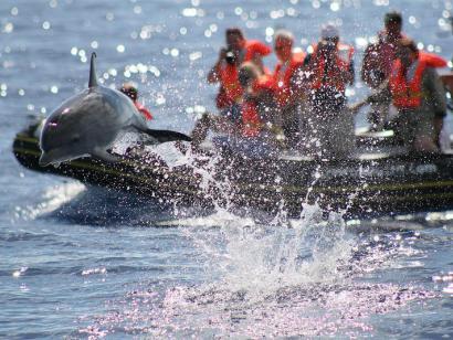 Reise in Portugal, Azoren - Pico: Delfine & Wale intensiv