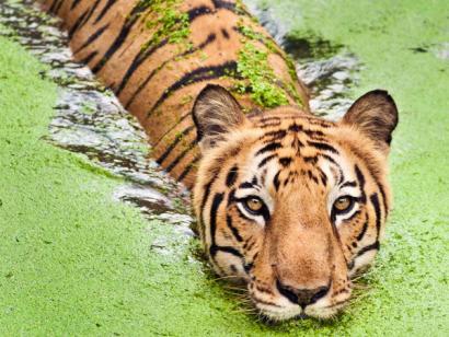 Bangladesch - Bootssafari durch die Sundarbans