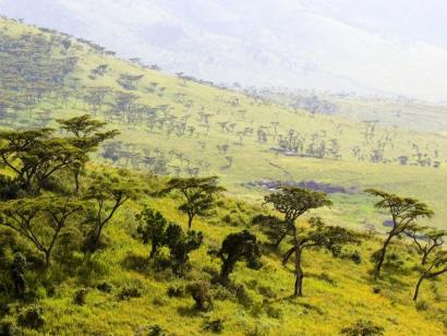 Berggorillas, Serengeti und Mafia Island Komfortsafari durch drei Länder Ostafrikas und Robinson-Crusoe-Insel