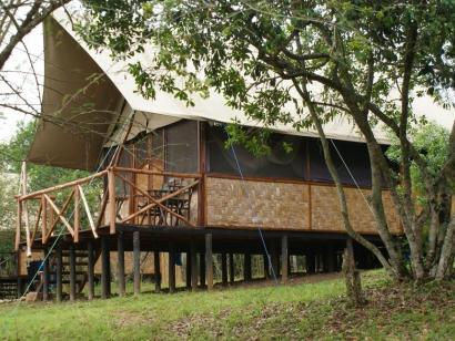 Reise in Tansania, Löwen im Gras