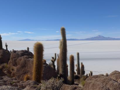 Reise in Bolivien, KVA_Isla_Incahuasi_Kakteen_Berge_3zu2.jpg.jpg