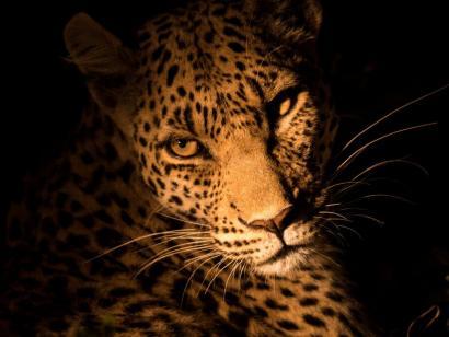 Reise in Botswana, Löwenmännchen, Moremi