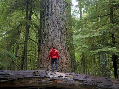 Reise in Kanada, Wanderer bewundert Riesenbäume, Cathedral Grove, Vancouver Island