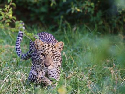 Reise in Kenia, Giraffenwanderung beim Aberdare Nationalpark