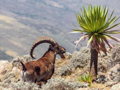 Durch die unwegsamen Berge Abessiniens Trekkingreise in die schroffen Semien-Berge und zu den geheimnisvollen Felsenkirchen Tigrays