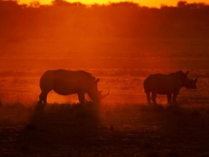 Reise in Botswana, Nashörner im Sonnenuntergang