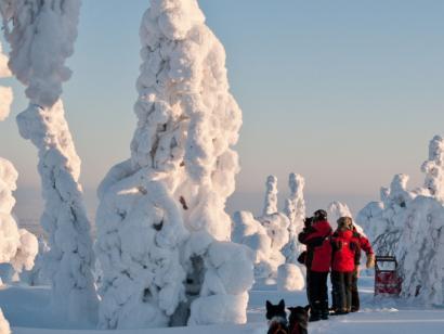 Reise in Finnland, Finnland: Husky-Schlittentour durch die Weite Lapplands (6 Tage Hundeschlittentour (4 Tage mit Huskys)  mit Hüttenübernachtungen)