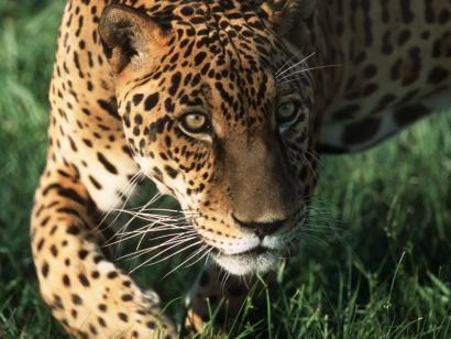 Fotoreise im Pantanal