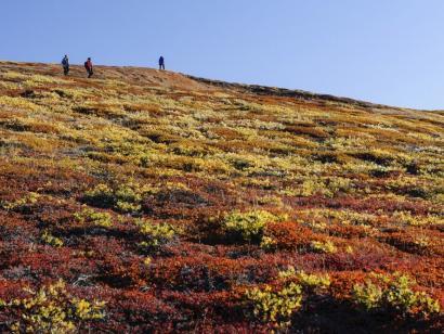 Gletscher, Herbstlaub und Nordlichter Intensiv und entschleunigt mit historischem Segler nach Spitzbergen und in die Fjorde Ostgrönlands