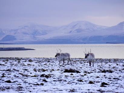 Reise in Spitzbergen, Im Spätherbst kann man herrliche Lichtstimmungen erleben