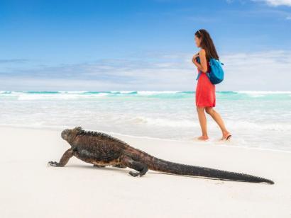 Reise in Ecuador, Meeresleguan am Strand der Tortuga-Bucht auf Santa Cruz