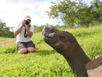 Reise in Ecuador, Riesenschildkröte vor der Linse