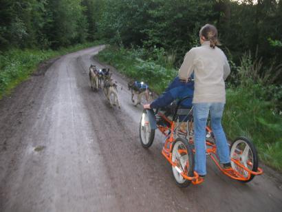 Reise in Schweden, Husky Trainingswochen