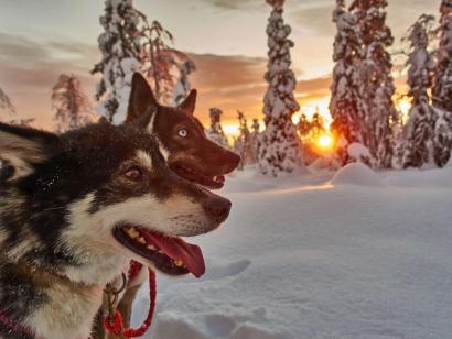 Husky-Wintertraum: Klassisch (Sa. – Sa.) Intensives Natur- und Huskyerlebnis im verschneiten Lappland mit drei Nächten in urigen Wildnishütten