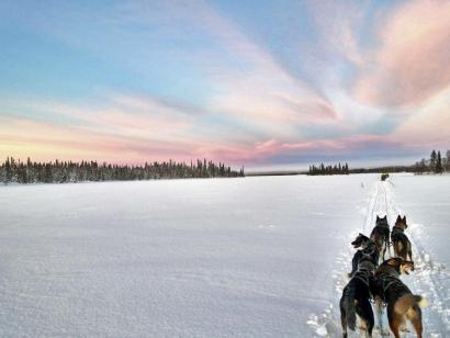 Reise in Finnland, Die Leithunde sind hochkonzentriert