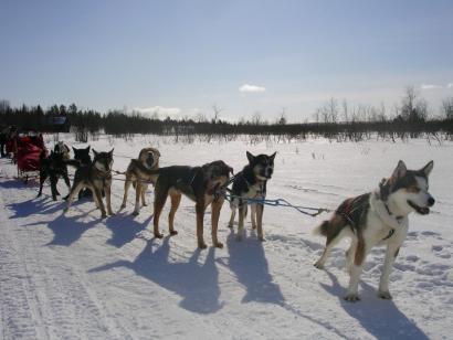 Reise in Finnland, Verschneites weites Finnland