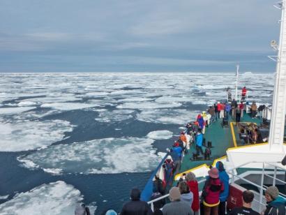 Reise in Spitzbergen, Eisbär im Profil