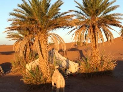Intensives Wüstenerlebnis und Sternstunden aus 1001 Nacht