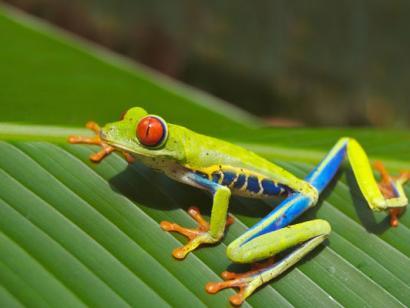 íPura Vida! Aktiv in Naturparadiesen am Pazifik