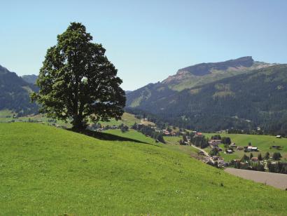 Reise in Österreich, Kleinwalsertal: Wandern & Meditation