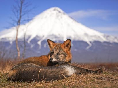Reise in Russland, Fuchs in der Tundra