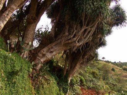 Reise in Spanien, La Palma - Natur und Kultur
