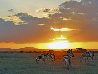 Lodgesafari und Sansibar Traumziel Ostafrika – Komfortsafari trifft auf die Gewürzinsel Sansibar