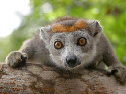 Madagaskar - Regenwald, Lemuren und Tropenstrand