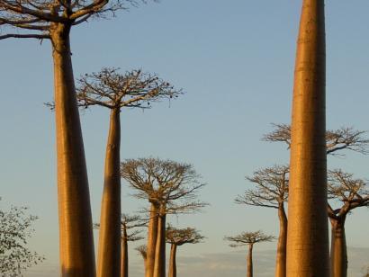 Reise in Madagaskar, Madagaskar - Reise: Fremde Welten, erhabene Momente (18 Tage von der Baobab Allee zu tropischen Flussoasen)