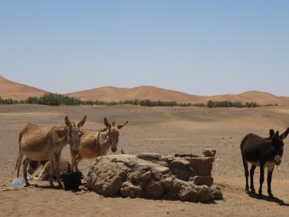 Marokko - Sahara: Fußspuren im Sand.... (8 Tage Kameltrekking)