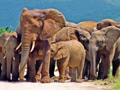 Mit Kind und Kegel entlang der Garden-Route Tafelberg, Traumstrände und Tierwelt hautnah – Südafrika in Familie mit Gleichgesinnten bereisen