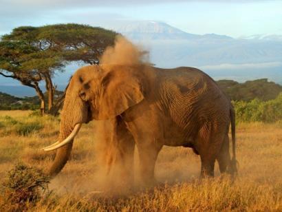 Reise in Kenia, Blick vom Meru auf den Kilimanjaro