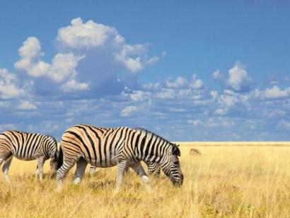 Namibias Highlights von Sossusvlei bis zum Etosha-Nationalpark