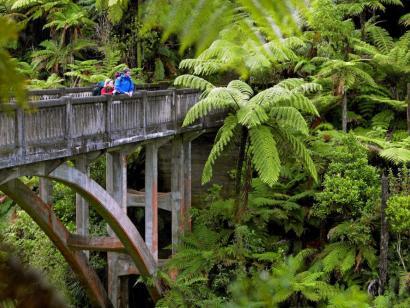 Reise in Neuseeland, Dschungelwanderung Whanganui River, Ruapehu District, Neuseeland