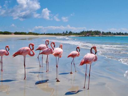 Reise in Ecuador, Flamingos auf den Galápagos-Inseln