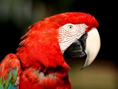 Naturwunder Brasiliens: Amazonas - Pantanal - Foz do Iguaçú