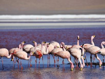 Reise in Bolivien, Kaiman auf der Pirsch