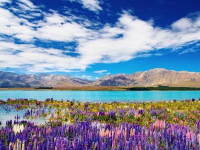 Reise in Neuseeland, Neuseeland - Faszination Neuseeland individuell erleben