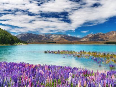 Reise in Neuseeland, Neuseeland:Höhepunkte