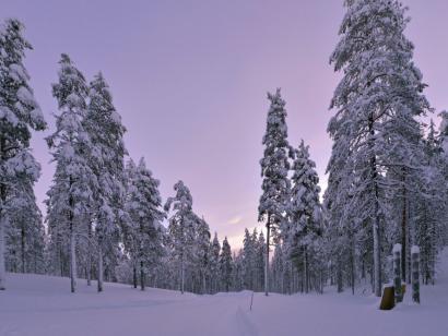 Nordlichter, Rentiere und Baumtrolle mit Hermann J. Netz Genuss-Fotoreise in die Winterlandschaft am Polarkreis mit Sauna, herzlicher Betreuung und exzellenter Küche
