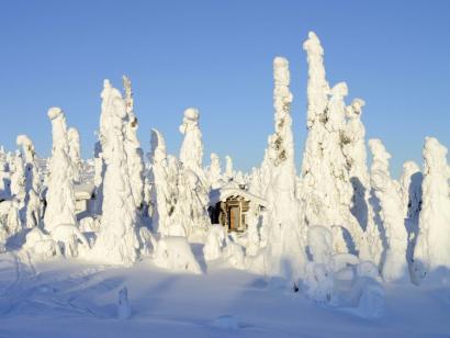 Reise in Finnland, Im Abendlicht über den Schnee-Troll-Wäldern