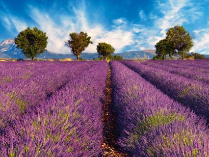 Reise in Frankreich, Provence: Kultur und Genuss - Lavendelblüte mit Christina Karmrodt